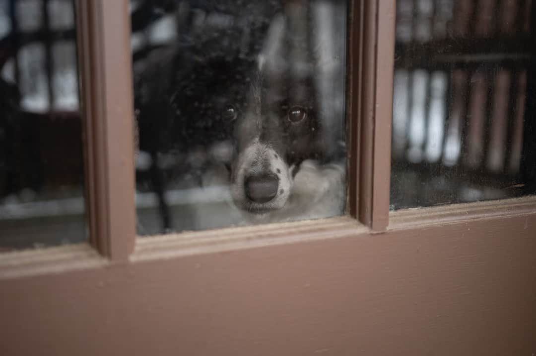 A dog looking out a window